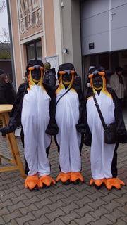 Pinguine waren in Apetlon auch zu besuch.