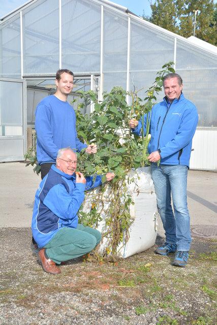 Stadtgärtner Mario Jaglarz und seine Mitarbeiter nutzen selbst einen bepflanzten Big Bag am Bauhof – die reiche Ernte wird mit allen Kollegen geteilt.