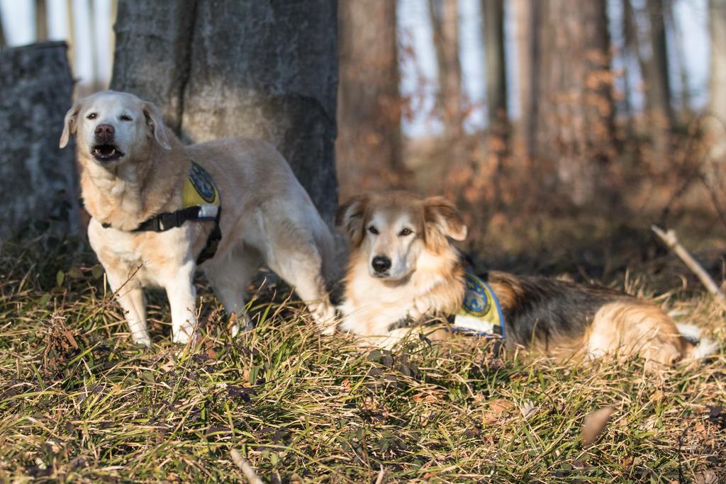 Die Rettungshunde Alisha und Musashi treten ihren wohlverdienten Ruhestand an.