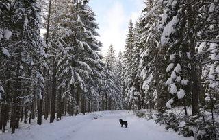 nächste Woche soll noch mehr Schnee dazukommen........aufgenommen Richtung Weinebene