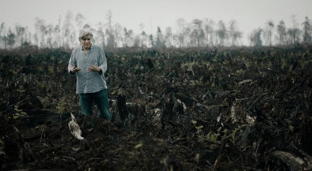 """Das von vielen Industriekonzernen beworbene """"nachhaltige Palmöl"""" gibt es nicht."""