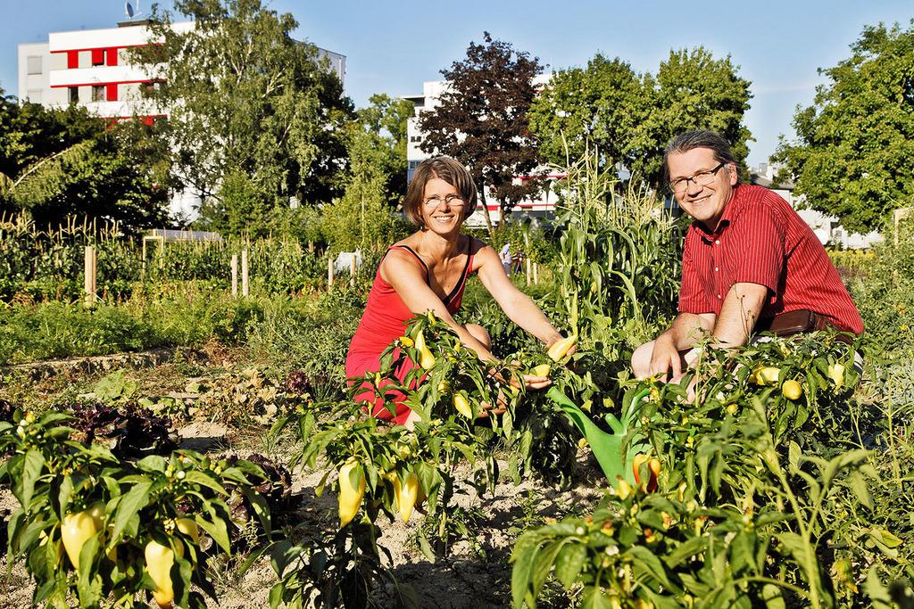 Üppige Ernte im Morgentaugarten