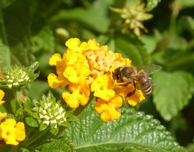 Bienen sind lebensnotwendig für die Bestäubung