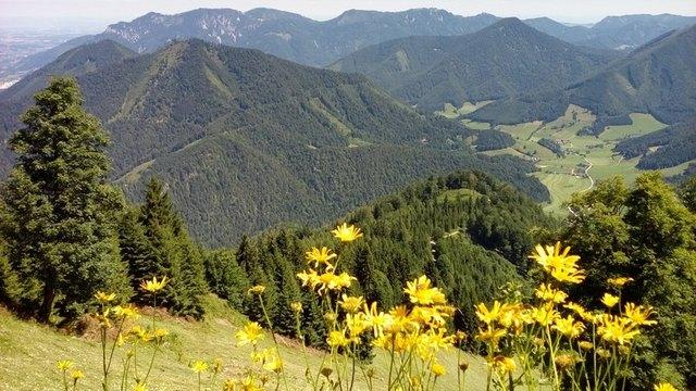 Bunte Bergwiesen sind keine Selbstverständlichkeit, sondern brauchen viel Pflege