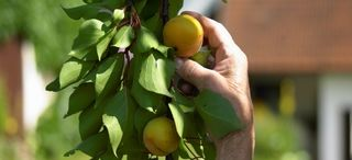 Einaldung zur Jahreshauptversammlung des Obst und Gartenbauvereins