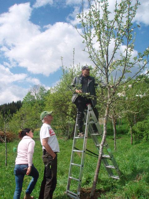 Im Bezirk Ried finden zwei Streuobst-Workshops statt.