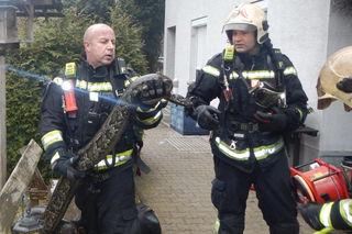 Unerschrockene Feuerwehrmänner brachten die Würgeschlange ins Freie.