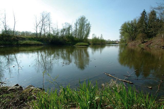 Die Innauen in Schärding sollen Naturschutzgebiet werden. Und die Auwälder am Unteren Inn gar Europaschutzgebiet.