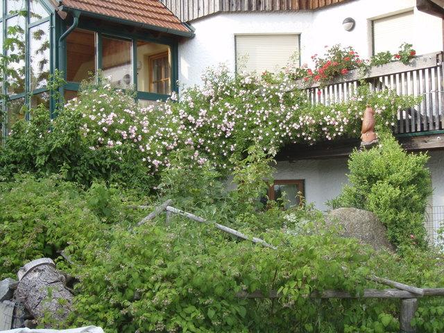 """Blühende Vielfalt vor im eigenen Garten: Petra Lutsch: """"Arbeiten im Garten sind gesundheitsfördernd."""""""
