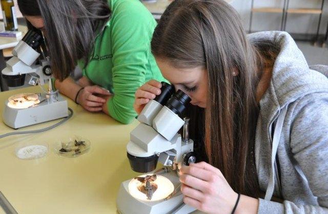 Tag der offenen Tür - künftige Schülerinnen im Nawi-Labor?