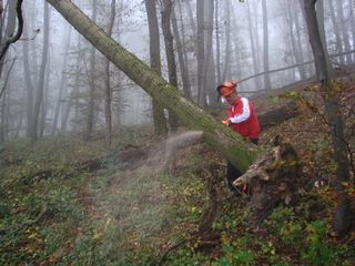Symbolfoto: Gemeinsam mit dem Bezirksforstexperten wird festgelegt, wo und in welchem Umfang Bäume gefällt werden müssen.