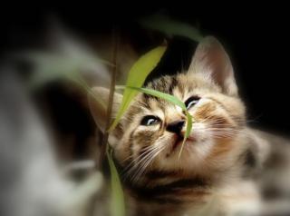 Die Bezirksblätter Niederösterreich suchen eure schönsten Katzenfotos und verlosen tolle Preise.