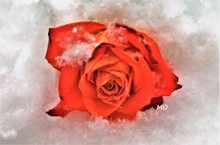 Ich denke an Dich und mit jeder Schneeflocke die vom Himmel fällt, sende ich Dir liebe Grüße!