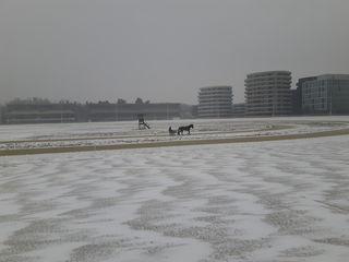 02.03.2018 einsames Training auf der verschneiten Rennbahn in der Krieau