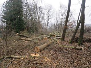 Der Winter ist im Wald wegen der Saftruhe der Bäume und durch die gefrorenen Böden die ideale Erntezeit.