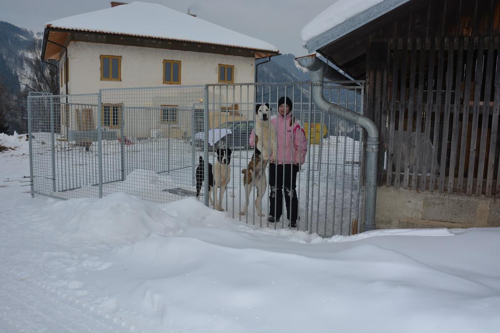 Syrina Lippitz und ihre Eltern retten Herdenschutzhunde und bauen gerade einen Gnadenhof in Wolfsberg auf. Sie wollen diesen besonderen Tieren eine Lobby bieten, da dies in Österreich bis dato nicht der Fall ist