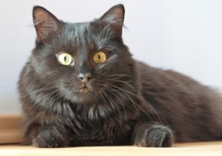 Schneller ans Ziel, flotter zum Vergnügen: Mit uns behältst du im Foto-Dschungel des Bezirksblätter-Katzenfoto-Gewinnspiels den Überblick