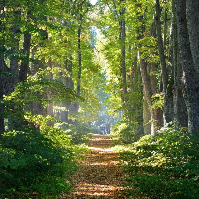 Ein Schritt vor die Haustüre zahlt sich aus: In unseren Wäldern findet man sowohl Ruhe als auch Abenteuer.