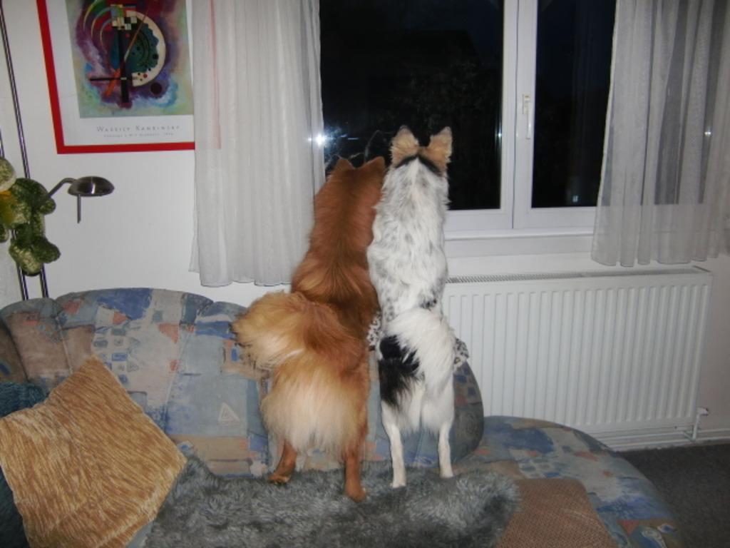 Ein Leben ohne Hund ist möglich aber sinnlos.Bärli und ...
