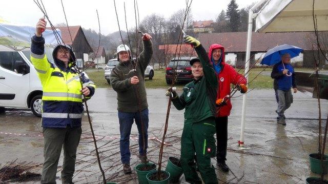 Die steirischen Baumwärter in Aktion.