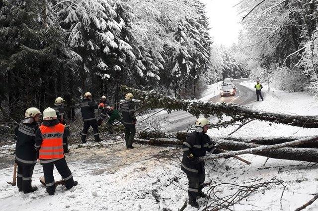 Vier ausgewachsene Bäume blockierten Sonntagmorgen die L 301 (Foto: FF Steinberg-Rohrbach)