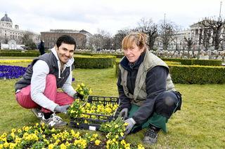Die Beete herrichten, Blumen austopfen und einsetzen: Rezaii Gulam Yahya arbeitet bereits die zweite Saison im Volksgarten.