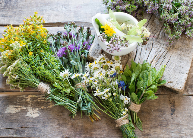 Wiesenpflanzen für bessere Heilung und Vorbeugung