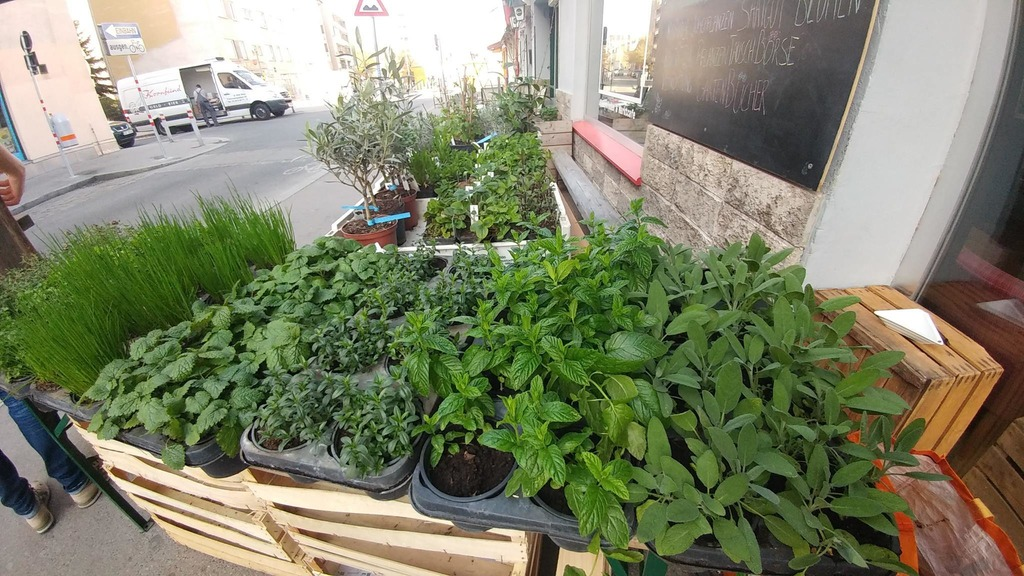 Balkonpflanzen Thema Auf Meinbezirk At