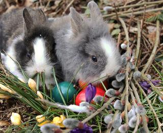 Auch Tiere feiern in Krenglbach das Osterfest.