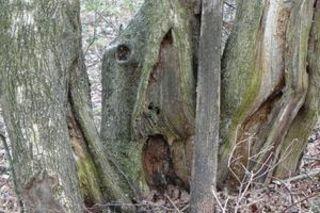 Der Schrei im Wald