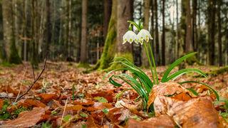 Das gesamte WOCHE Steiermark Team wünscht ein schönes Osterwochenende.