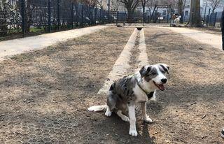 Koda in der kleinen Hundezone im Mortarapark — hier gibt es kein Gras, das Erdreich ist abgetragen.