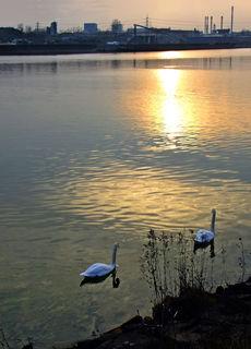 Standort der Aufnahme: Donauau bei Steyregg