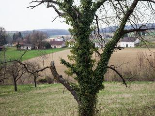 Fotocredits: Regina Courtier. Der Baum als Wirt, am Pfaffenbründlweg.
