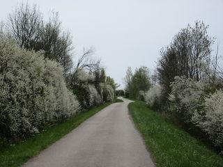 zwischen Eisenstadt und Trausdorf