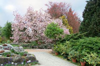 Schon im Eingangsbereich fällt der blühende Magnolienbaum auf