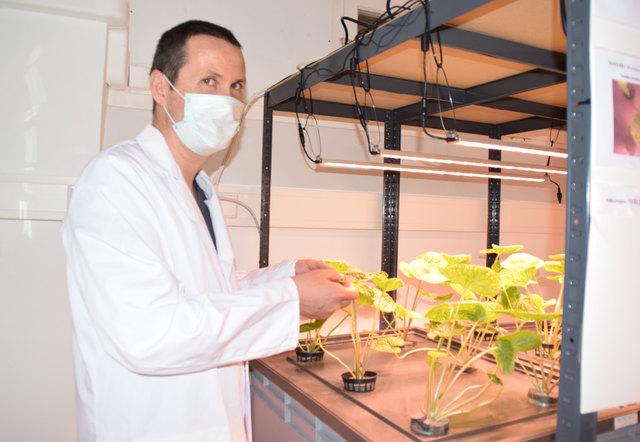Im Labor von Martin Parapatits findet der Wasabi genau die Bedingungen vor, die er zum Wachsen braucht.