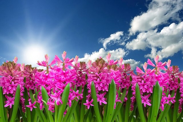 """Der """"Aprilsommer"""" hält übers Wochenende an. (Symbolbild)"""
