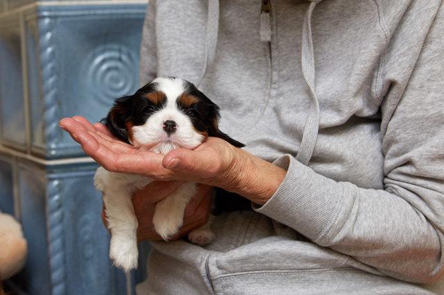 Leo 5 Wochen alt *love* Foto Martin Hirtreiter
