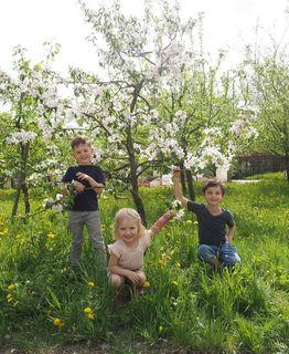 Jona, Amelie und Jonathan bei einem jungen Apfelbaum.