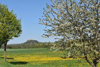 Die Burg Güssing von Glasing aus gesehen.