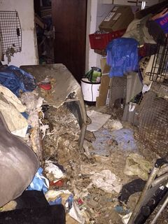 So sah das Haus im November 2014 aus, in dem eine Frau aus dem Bezirk Schärding 38 Hunde hat verhungern lassen.