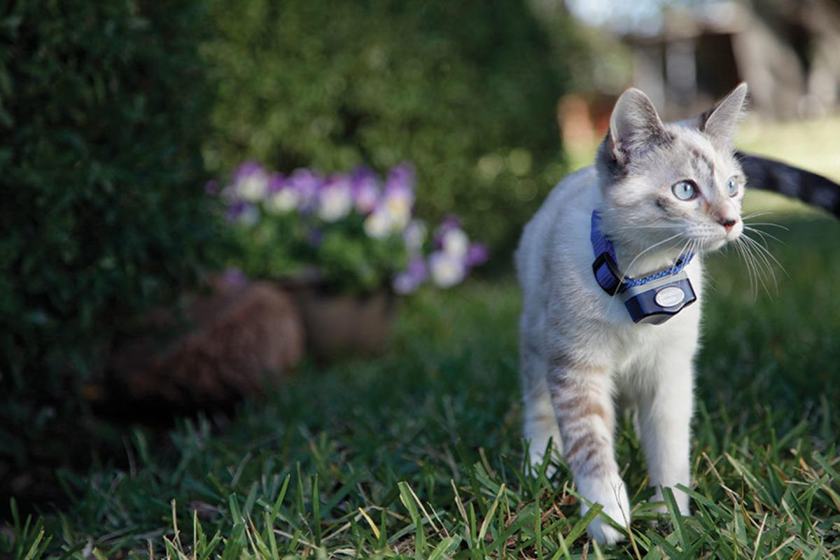Katzen Serie Teil 5 Warum Es So Sinnvoll Ist Den Garten