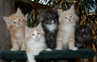 Schmusetiger oder gnadenloses Raubtier? Experte Thomas Weber widmete sich für die Bezirksblätter Niederösterreich acht Wochen lang dem Thema zeitgemäße und ökologische Katzenhaltung.