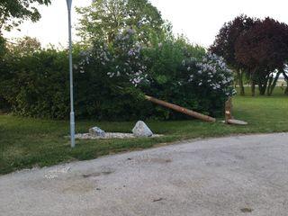 In einer Nacht- und Nebelaktion wurde der Baum umgesägt.