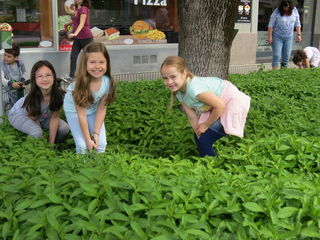 Die Kinder der Volksschule Wolfgang-Schmälzl-Gasse sind eifrig beim Einsetzen der Arzneipflanzen.