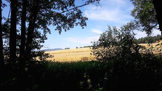 Ein goldenes Feld