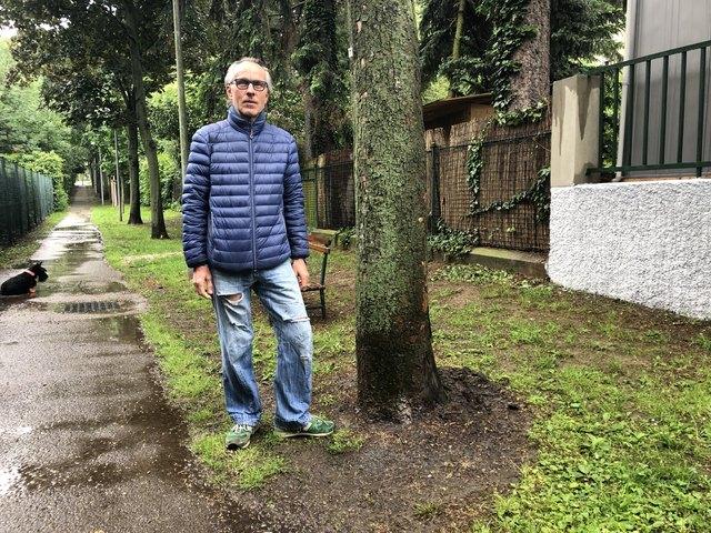 Bestürzung im Franz-Barwig-Weg: Anrainer Ingo Weber zeigt den Ahornbaum, der mit Benzin gegossen wurde.