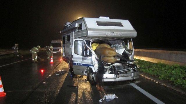Vier Pferden verirrten sich auf die Tauernautobahn A10. Drei von ihnen verstarben durch Unfälle.