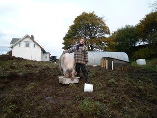 Beim WWOOF-ing bekommen Freiwillige Einblicke in den Bio-Landbau im Ausland.